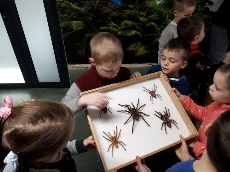 Wystawa entomologiczna